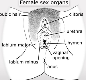 The reproductive system review